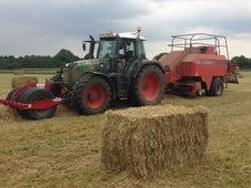 High Quality Haylage/Hay/Straw For Sale
