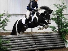Talented 13.2hh all rounder