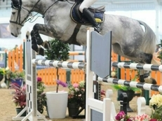 Talented SJ/ Eventer / Hunter