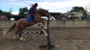 Wanted.14-14.2hh all rounder.Full loan/LWVTB.