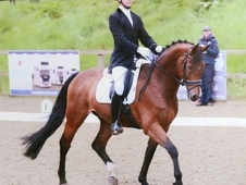 National dressage gelding by Remi Martin.