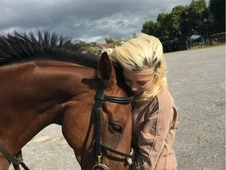Beautiful, kind safe mare/ ideal pony club