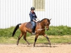 Super talented Dressage horse