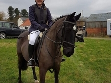 *REDUCED PRICE*Fab little competition pony for sale! *