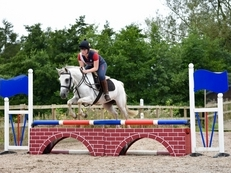 Pony Club/ Competition Allrounder