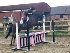 COUNTY LEVEL SHOW COB / PROVEN HUNTER / RIDING CLUB ALL ROUNDER