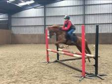 Super PC/ SJ Competition pony, 12. 2hh, 15y. o, Chestnut gelding