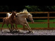 Striking Cremello Mare