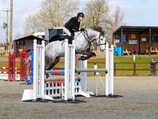 Fantastic, sensible, all rounder, competition/Pony Club/Riding Cl...