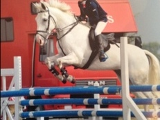 14.2 All rounder for sale PERFECT FOR A NOVICE
