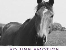 Reiki Therapy for Horses