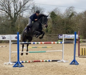 Andrea - 16.3 hands 5 years old Top Class mare