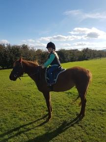 British riding pony