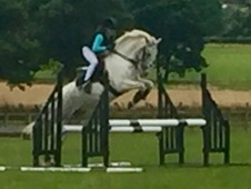 Stunning 6 Year Old 13. 1hh Connemara Cross Jumping Pony
