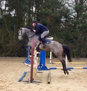 Reanna - A BEAUTIFUL SUPER CAREFUL MARE DESTINED FOR THE TOP SPORT