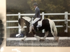 MUCKLE JOHN- ABSOLUTELY TOP CLASS 13.1 TRADITIONAL / NATIVE COB