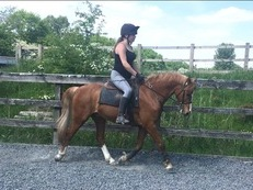 Fantastic 13hh Competition Pony/ second pony