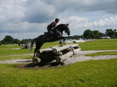 Ideal Riding Club Horse Or Quality Allrounder!