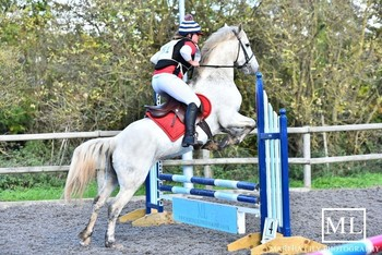 Super 14.3hh registered Connemara mare