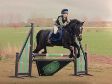 14hh Show Jumping / PC / Hunting Mare