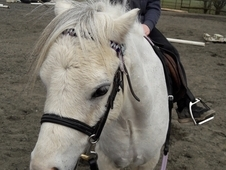 Tommy our beloved pony sadly for sale