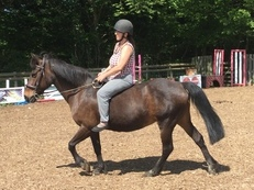 Fully registered New Forest mare.Sale/swap/ px considered.