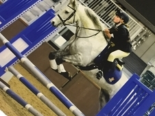 wanted- genuine allrounder/eventer