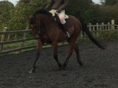 RoR eligible rising 4yo tack incl