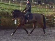 Super Dressage Event Horse prospect