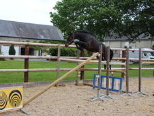 Outstanding 4 year old jumper