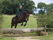 13hh 12Yr All rounder