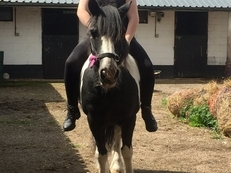 WANTED 14hh horse for FULL loan and TO MOVE YARDS