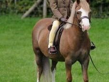 11. 1hh M&M Lead Rein Pony