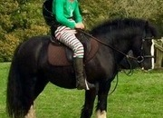 King , fantastic Gelding for sale in Dorset