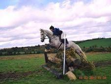 Superb 16. 3hh 5yr Old with Amazing Paces