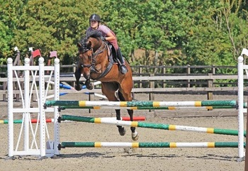 Wanted: Showjumper for loan