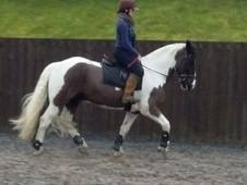 Great allrounder fun horse