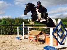 Stunning all-rounder mare