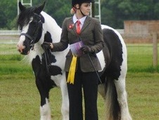 Stunning Cob Mare For Sale