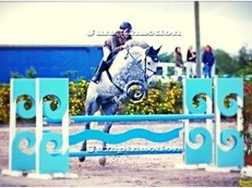Top Class hunt horse/Worker/SJ - Grade A 16.2hh 10yr Old 215points