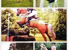ALL ROUNDER / POTENTIAL TOP BSJA PROSPECT / BYRDS HROSE FOR SALE