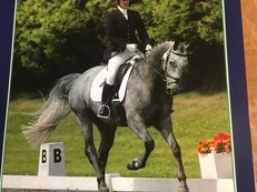Stunning Homebred Competition Horse
