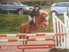 12. 2hh handsome Grade A SJ Irish 19yo gelding