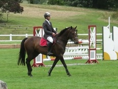 16HH SHOW JUMP/BE/ALL ROUNDER - ROLLS ROYCE BREEDING!