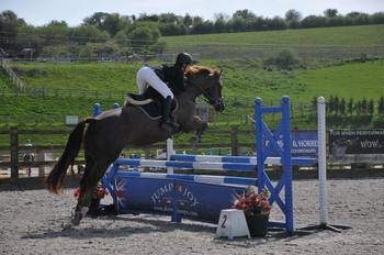 Irish Sport Horse available to share 2 days a week