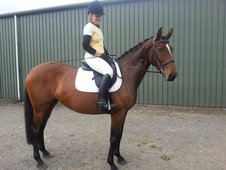 15. 2hh Riding Mare