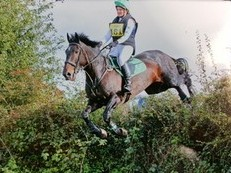 16 1hds Irish cross eventer