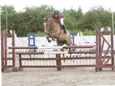 Experienced freelance riding available in the Nottingham area
