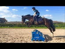 Amazing Confidence Giver / All Rounder / Welsh Section C Gelding