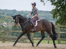 Potential ROR/ Riding Club/ Dressage
